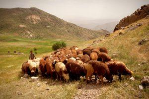 چراگاه دام عشایر